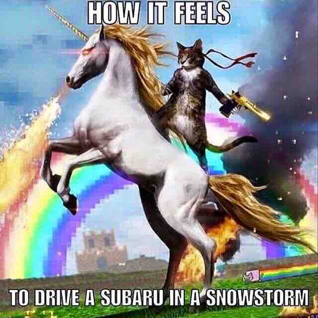 subaru-cat-unicorn